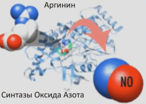 шила-аргинин